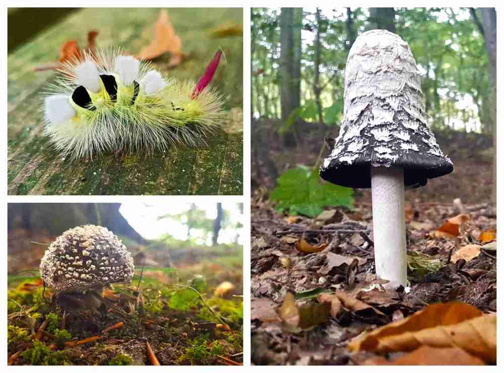 Mushroom Collage (1)