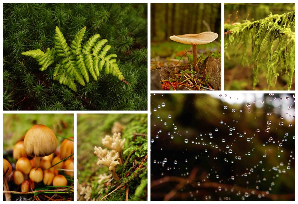 1 galloway forest collage